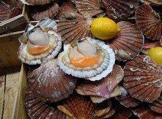 Морские гребешки - Фотография