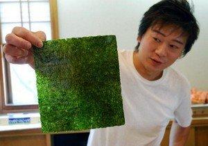 Нори-водоросли