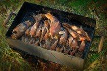 Правильно коптим рыбу дома и на природе