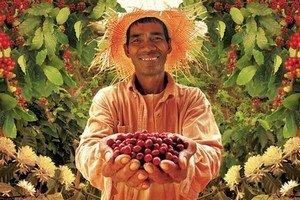 Кофейная индустрия дает множество рабочих мест на своих кофейных плантациях