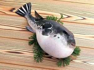 Общие сведения об отравлении рыбой фугу