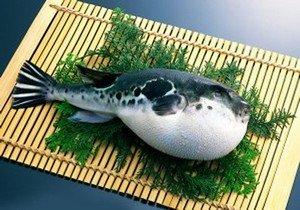 Симптоматика отравления рыбой фугу