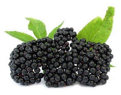 Бузина - вкусные ягоды для производства варенья