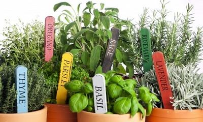 Сохраняем свежесть зелени
