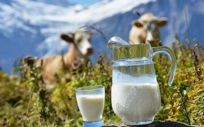 Молоко — полезный и многофункциональный продукт